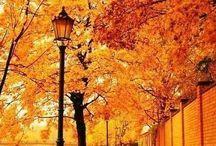I Love Fall! / by Sara R