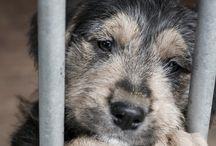 Shelter/ pet treats/ ideas