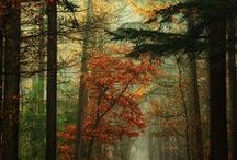 Voyage dans la Nature / Nature...quand tu nous fais rêver