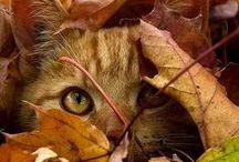 Chats du monde entier / Les chats... mes animaux domestiques préférés...
