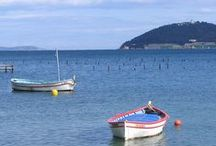 La mer dans tous ses états / La mer, le littoral, la faune et la flore...