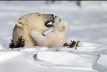 Bébés animaux... / On les trouve si mignons qu'on voudrait les protéger et les voir vivre dans la nature (au lieu des zoos)...