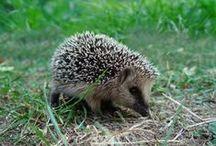 Insectes et animaux utiles au jardin / Tous les petits animaux et les insectes qu'il faut protéger non seulement pour conserver la biodiversité mais pour l'équilibre naturel de votre jardin bio...
