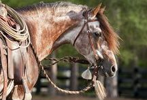My First Love / Horses  / by Sharon Parkin