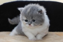 Cute! / by Mary Wilson