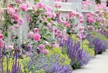 How Does Your Garden Grow? / Gardens, Roses, Flowers, Landscaping, Outdoor related accessories