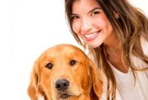 pets at home / How To Master Dog coaching Dogs aren't any doubt man's best friends. they're undoubtedly fun to be with and build nice companions.