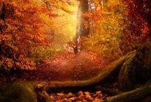 autumn joy  / by Frances Hood