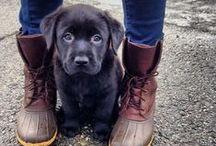 I Need a Dog / by Lauren Fane