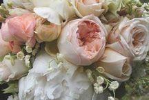 F L O R A L ... / LOVE fresh flowers!! / by Janet Copeland