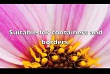 Plant Videos