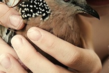 avian / by Mary Beth Owen