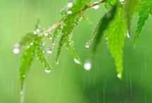 Rainy Days / by Delta Jordan