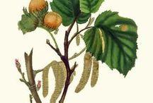 Hazelnut Trees and Treats / by Charting Nature