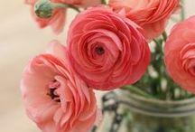 Precious Peonies and Ravishing Ranunculus