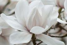 Floral Fetich / by Sarah Schlegelmilch