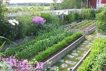 Raised Bed Gardens / by Growing The Home Garden