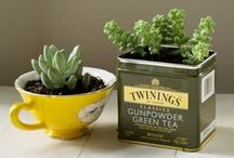 So Succulent / Succulent care and propagation tips for the best plant on earth.