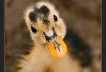 animal/bird pics / by Danielle Bayer Kostlich