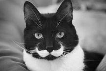 Grandpa's moustache / by Danielle Bayer Kostlich