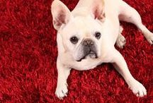 Frenchies by Natural Area Rugs / French bulldogs