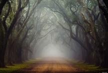 It's a beautiful world / by Lindsay Zeth