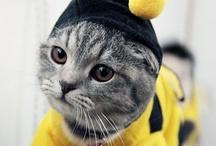 Kittens in Costumes / by zentified