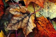 Fall / by Lindsay Zeth