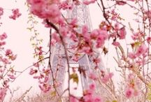 Spring. Magical Beauty and Decor inspirations by Natural Area Rugs