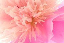 blooming / by Angela Rumel