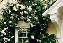 Garden & Landscape / Garden and landscape inspiration - From flowers and shrubs to raised veggie gardens!