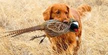 Hunting   Game Birds / For the dedicated hunter, upland game birds are always a challenge. Ruffed Grouse can be one of the most difficult birds to hunt. Follow this board for all things relating to upland game birds like Ruffed Grouse or Quail. We'll go over tips, tricks, and strategies to help you bag a grouse or quail on your next outing.