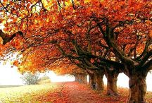 As summer turns into fall... / all things Autumn