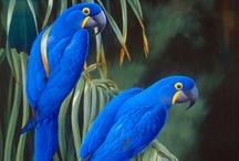 Birds / by Patty LaMontagne
