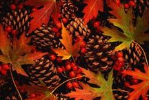 Autumn / ... a time for being thankful - for the harvest, our families,  and our friends.