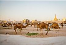 Travel | Middle East & North Africa