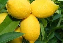 Love of Lemons