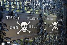Toxic Plants & Fungi / by Tina O