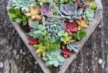 In The Garden :] / Have a green thumb? / by Stephanie Ruiz
