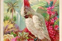 STUFF: Tropical/Beach Decor / Some vintage, some new, some indoors, some outdoors.  / by Lois Deveneau@LifeArtStuff
