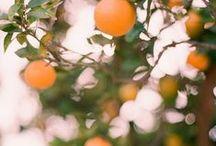 Gardening / by Ama Reynolds