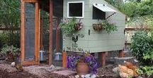 Chicken Coops, Traditional