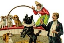 Circus DOGS