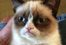 Grumpy Cat / by Ama Reynolds