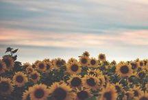 Summer Lovin / by jenn taylor