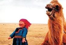 Smile Laugh Snort / by Gail N. Mode