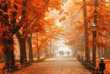 Fall Holidays / Halloween & Thanksgiving / by Jennifer Faia