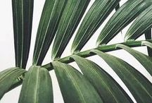"""botânica / A palavra Botânica vem do grego botané, que significa """"planta"""", que deriva, por sua vez, do verbo boskein: """"alimentar"""". É o estudo científico da vida das plantas e algas."""