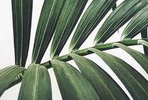 Botanica / by Clarissa Cardoso Santos