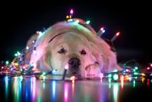 Holiday: Christmas / by Tiffany Rausch